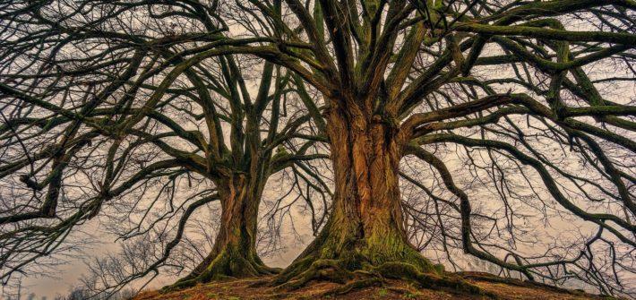 Kräftige Bäume im Winter.